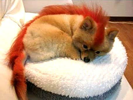 Mascota de Firefox