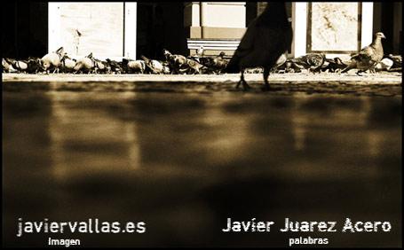fotografía digital: La paloma sin nombre