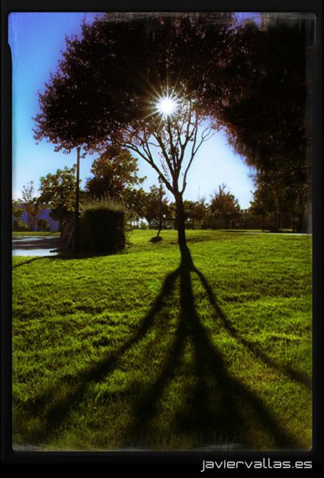 Árboles Mágicos, fotografía digital: Luz y sombra